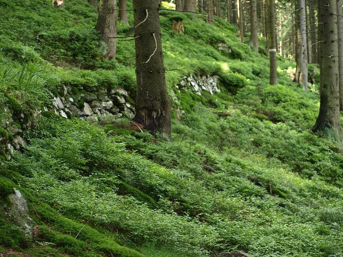 Schwarze Leiten -  Altvatergebirge