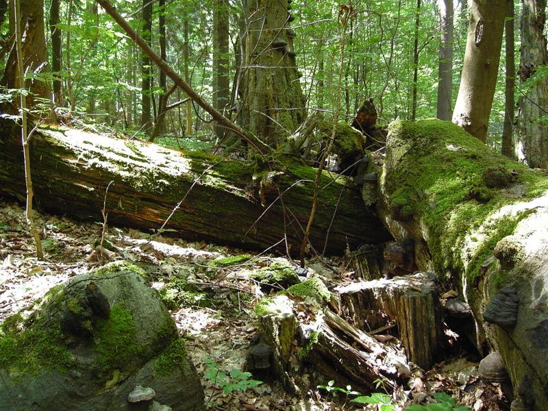 Prales Velký a Malý Polom