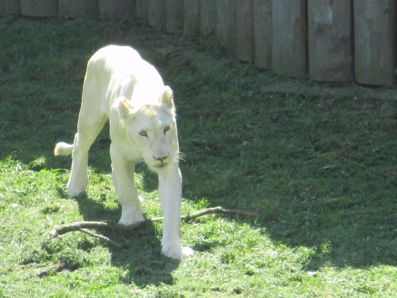 Zoo Hodonin