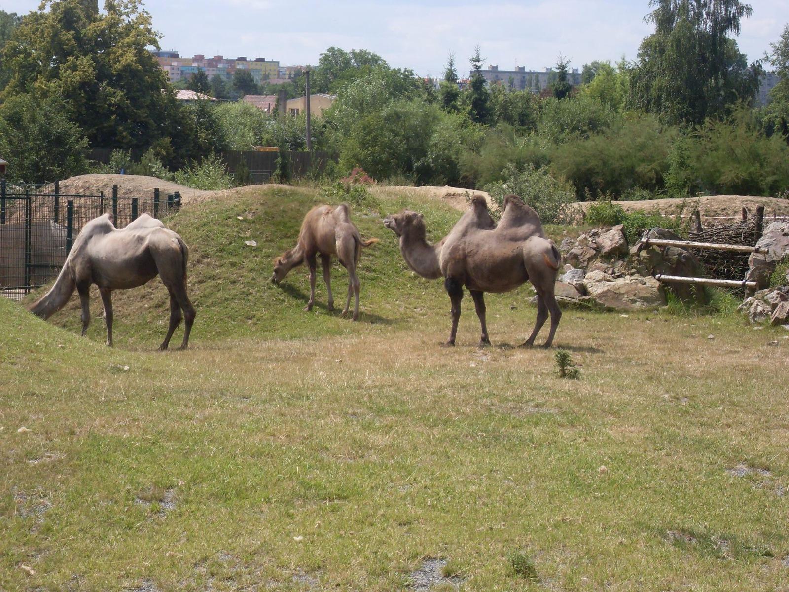 Zoologická a botanická zahrada, Dinopark Plzeň