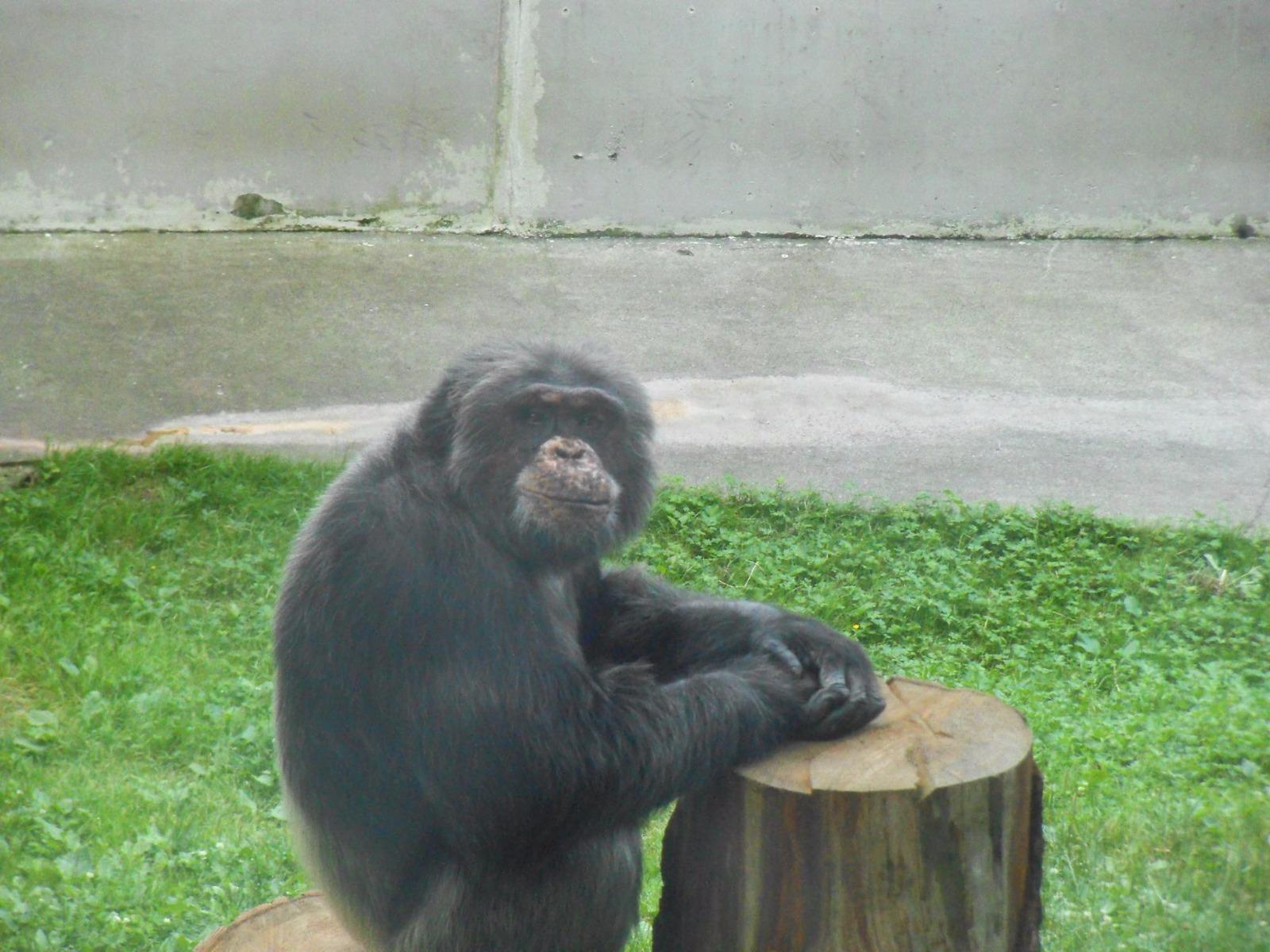 Zoologická zahrada Liberec